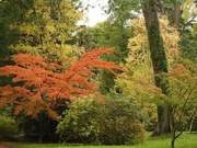 9th Oct 2020 -  Autumn Colours at Hergest Croft