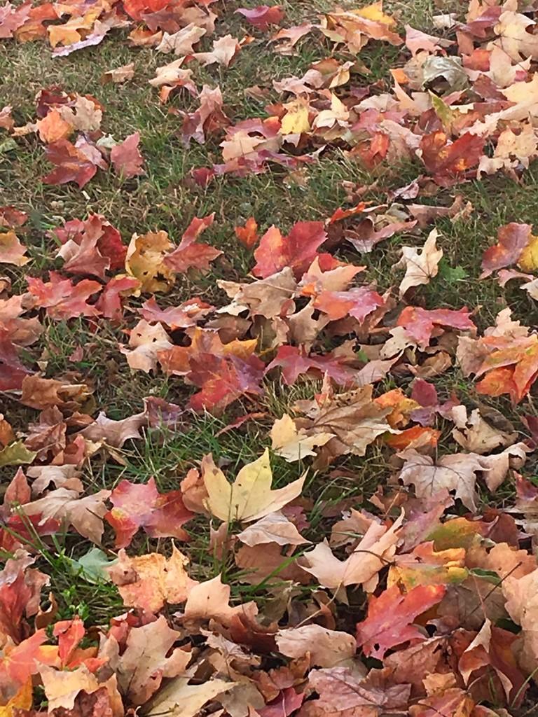 Autumn is definitely here........ENJOY! by essiesue