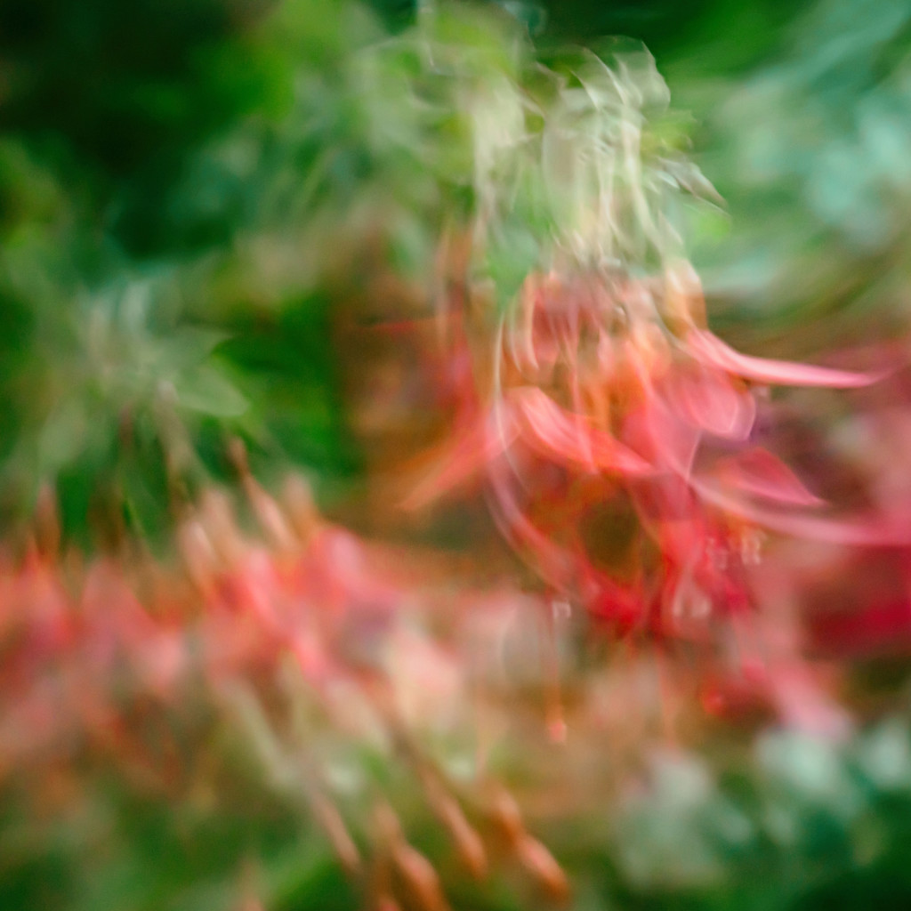 Fuchsia ICM. by gamelee