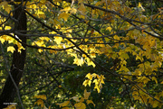 9th Oct 2020 - Fall colors 007
