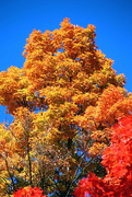 9th Oct 2020 - Fall Colors