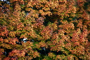 10th Oct 2020 - Fall Color