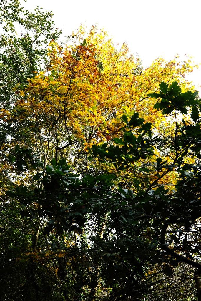 Golden Tree by allsop
