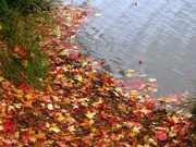10th Oct 2020 - Fall Leaves