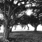 10th Oct 2020 - Trees of Lymphleigh #2