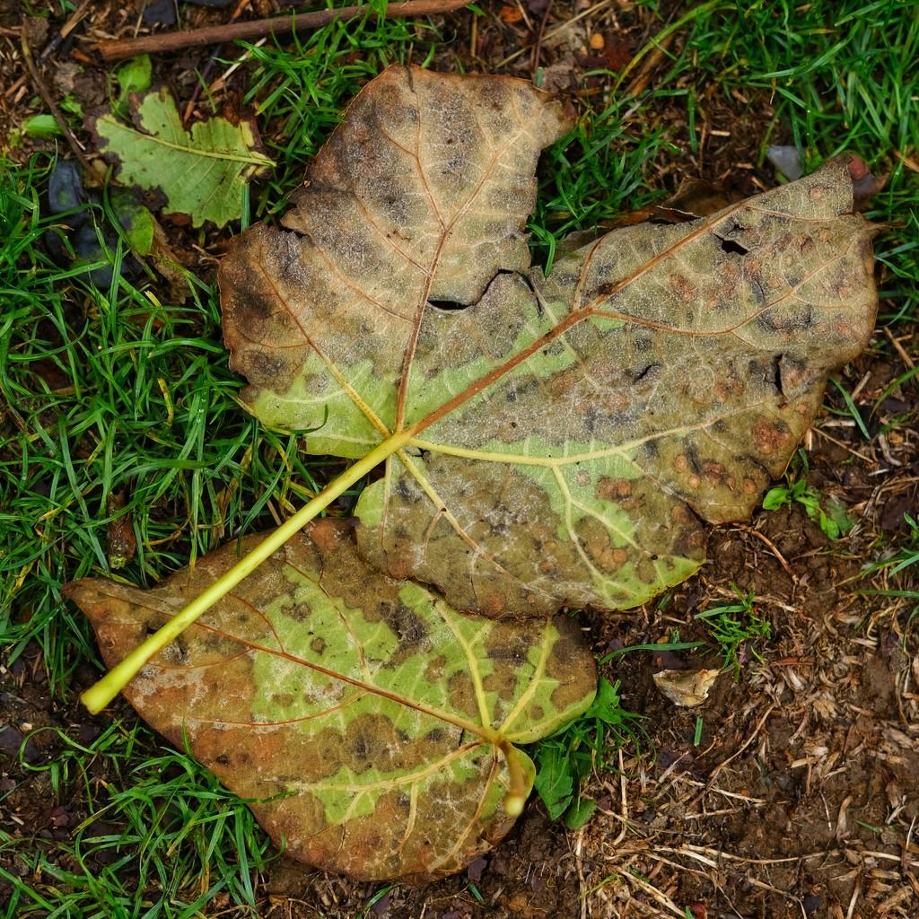 Fallen leaves by 4rky