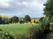 10th Oct 2020 -  A Walk Near the House