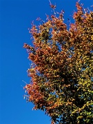 10th Oct 2020 - Autumn