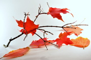10th Oct 2020 - The autumn reds...