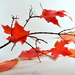The autumn reds...