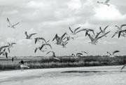 8th Oct 2020 - Sea Gull Day at Lake Okeechobee