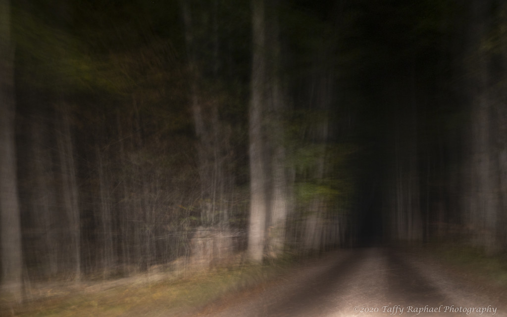 Into the Woods at Night by taffy