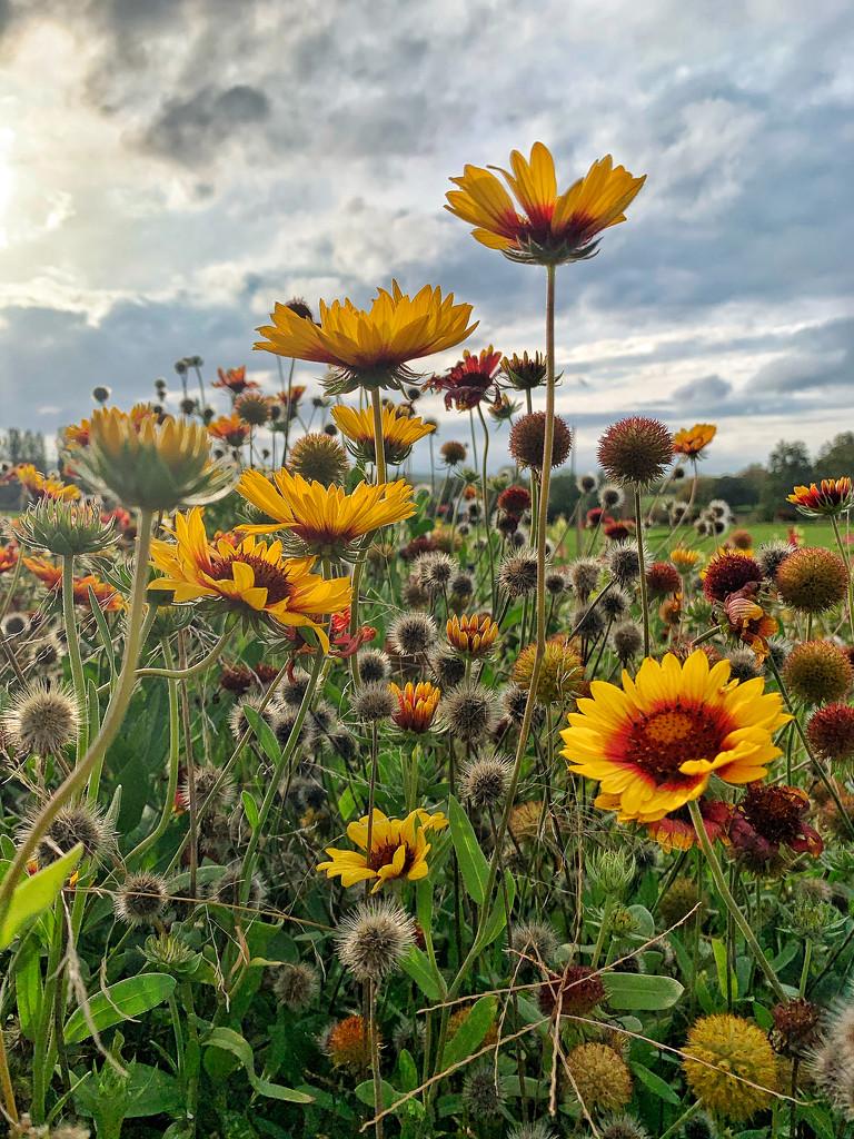 Season's flowers.  by cocobella