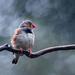 Pretty Bird by yaorenliu