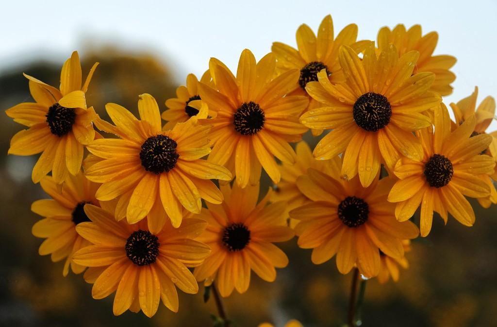 A Burst of Sunshine by milaniet