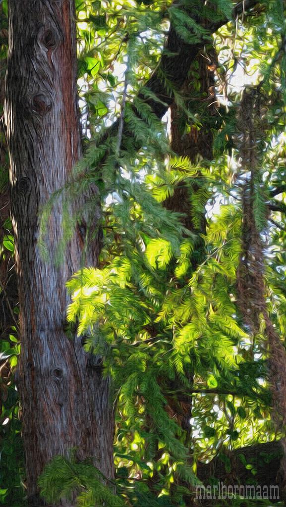 Painted Cypress... by marlboromaam