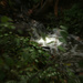 Spin Creek