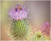 10th Oct 2020 - Bee Careful