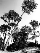 12th Oct 2020 - Trees of Keurboom #2