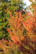11th Oct 2020 - Autumnal Splendour