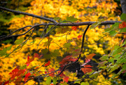 10th Oct 2020 - More autumn colours