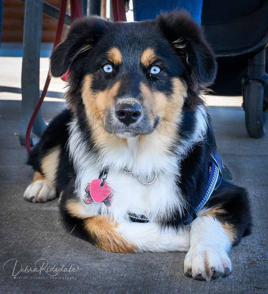 Met Cora while camping this weekend  by dridsdale