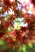10th Oct 2020 - Cascade of Light and Leaves