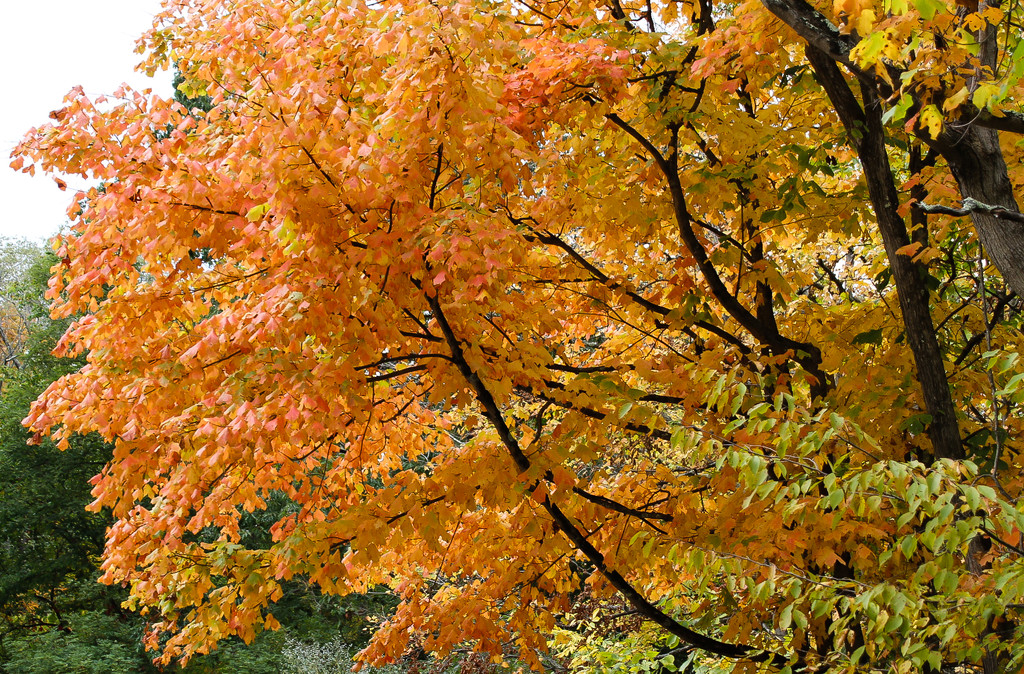 Autumn tree by mittens