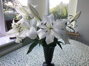11th Oct 2020 - Lilies