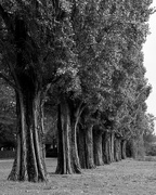 11th Oct 2020 - Trees in a row