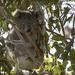 Meggs in style by koalagardens