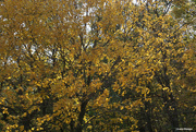 11th Oct 2020 - Fall colors 008