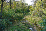 11th Oct 2020 - The local creek