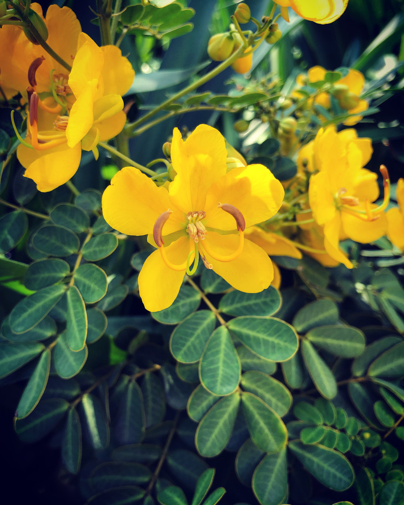 Butterfly Bush by loweygrace