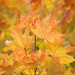 Autumn leaves by kiwichick
