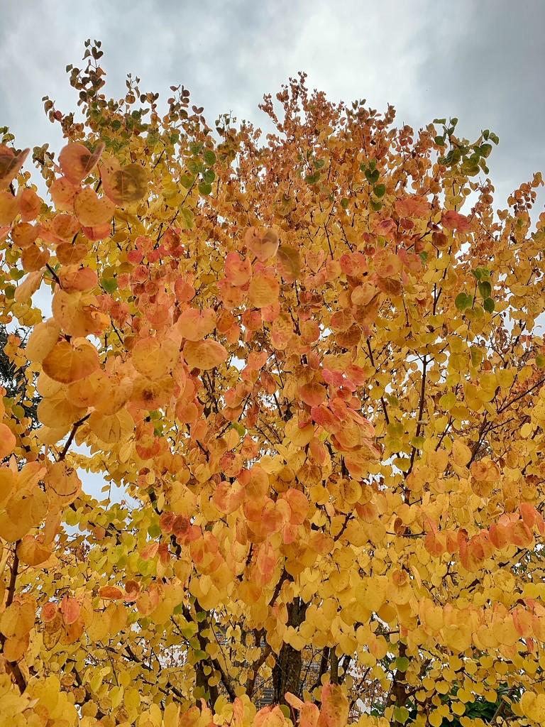 Falls colors.  by cocobella