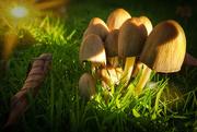 11th Oct 2020 - Fungal burst