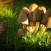 Fungal burst
