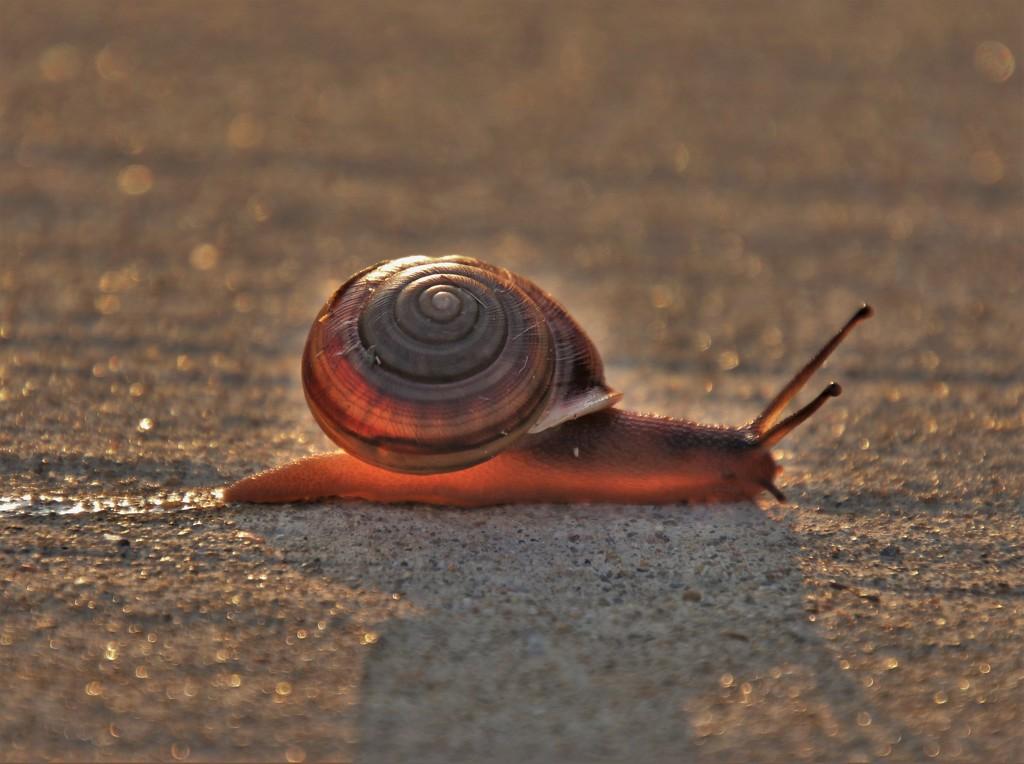 Sidewalk Snail 2 by lynnz