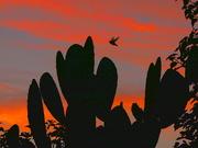 10th Oct 2020 - Crimson Sunrise