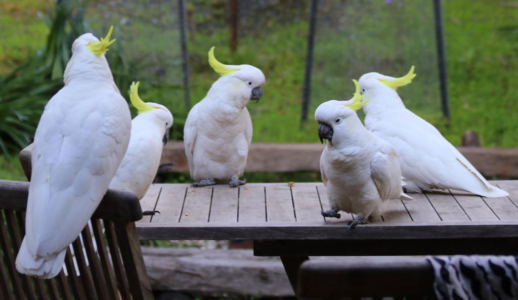 Breakfast meeting by gilbertwood
