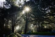 18th Sep 2020 - Sunburst through the trees