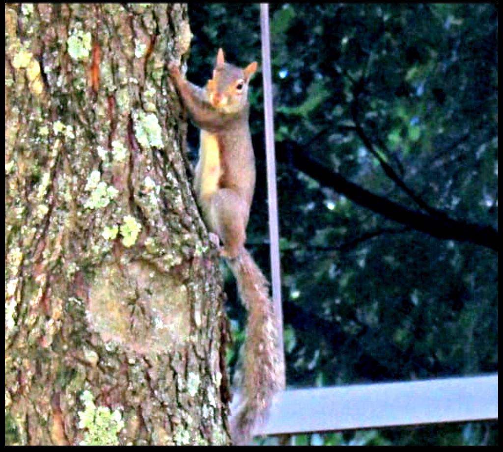 Say Squirrel  by moviegal1