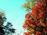 12th Oct 2020 - Autumn glory