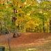 Backyard Color by pej2
