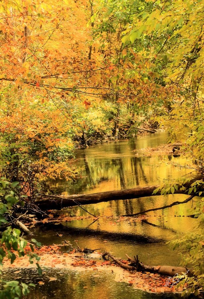 Fleming Creek by flygirl