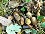 8th Oct 2020 - Nest of Nuts
