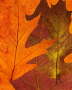 12th Oct 2020 - Leaves
