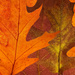 Leaves by janturnbull