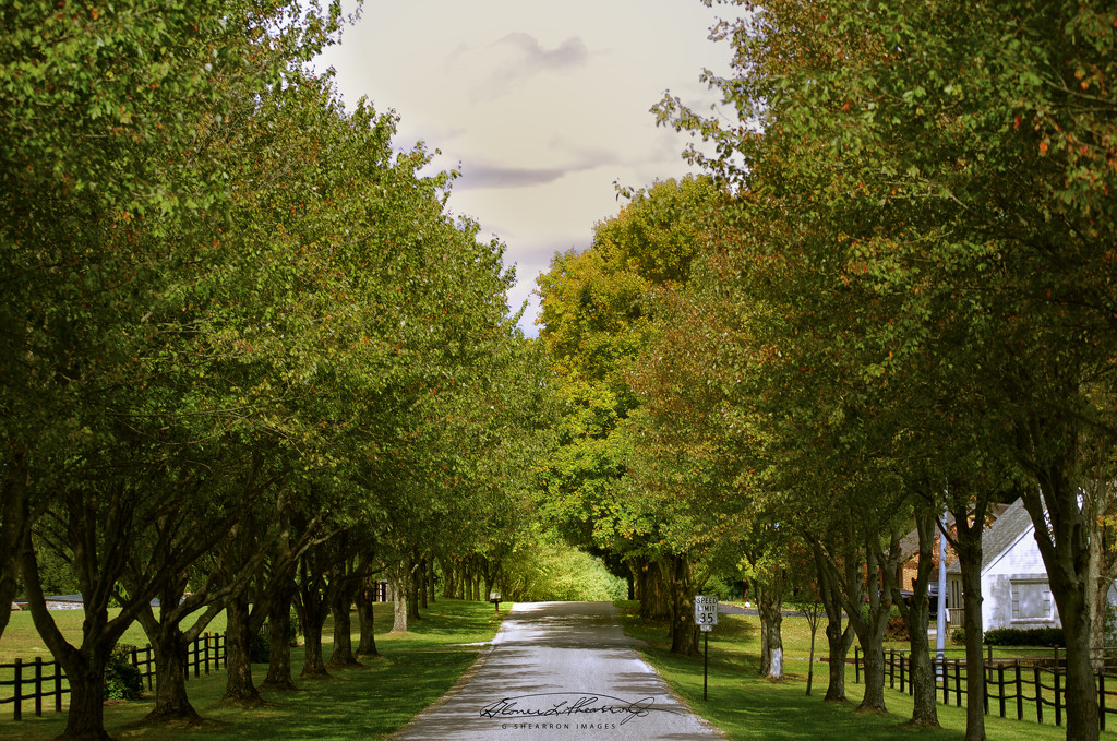 Knox County Lane by ggshearron